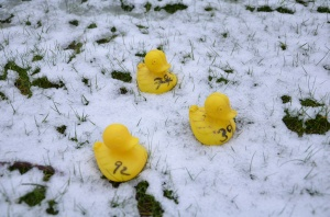 Three winning ducks in the snow
